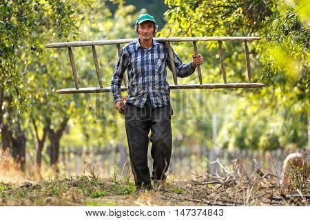 Old Farmer With Wooden Ladder