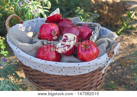 Basket Of Ripe Pomegranates