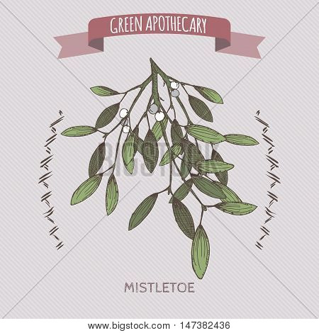 Viscum album aka mistletoe color sketch. Green apothecary series. Great for traditional medicine, gardening or cooking design.
