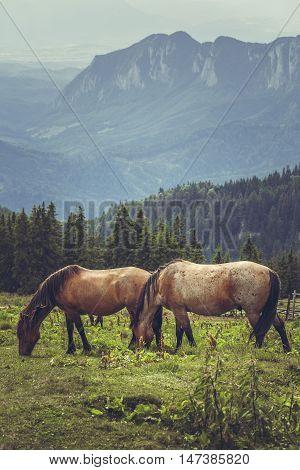 Pair Of Grazing Horses