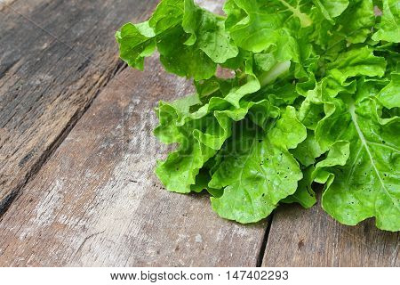 Chinese cabbage organic vegetables on a wooden table. Insect eat hole in the leaf.  with copy space
