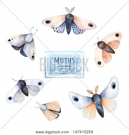 Set of high quality hand painted watercolor Butterflies and moths