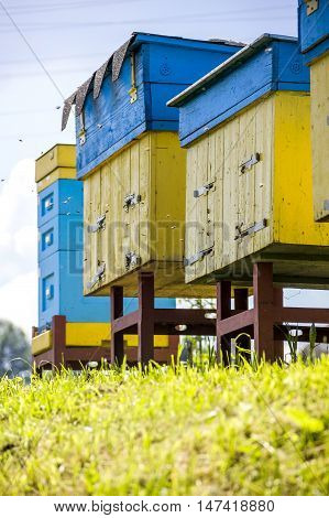 the some blue and yellow beehives at the apiary