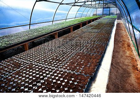 Seedlings In A Arched Greenhouse