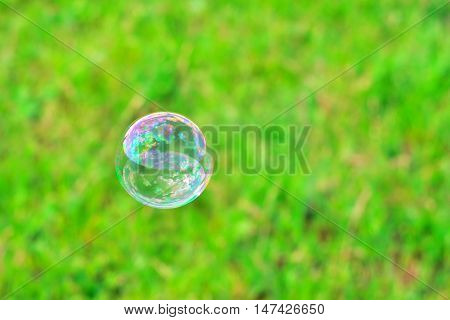 Soap bubble on the background of green grass
