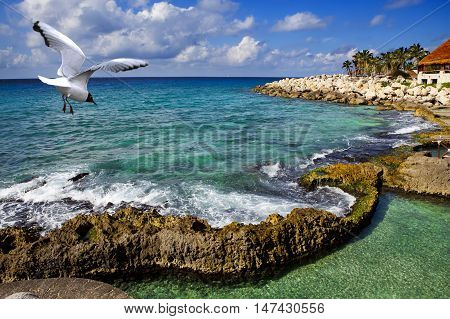 seagull over the sea in park near Cozumel Mexico