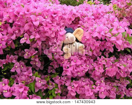 A Fluffy Baby Elephant Doll in the Pink Flowering Shrubs