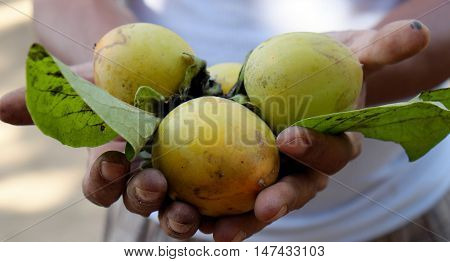 Persimmon Fruit, Vietnam Agricultural Product