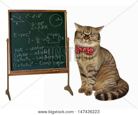 Scottish Straight cat wears glasses and a bow tie on white background