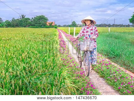 Long An, Vietnam - September 6th, 2016: Farmers leads bicycles to visit the rice fields in morning on rural roads in the Mekong Delta, Vietnam