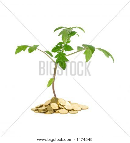 Plant Growth - Business Concept