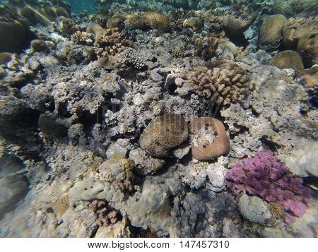 Underwater landscape on a shallow coral reef with sea urchin and calm water surface in the Red sea