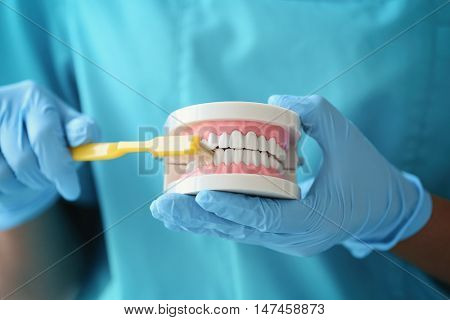 Female dentist cleaning dental jaw model with toothbrush