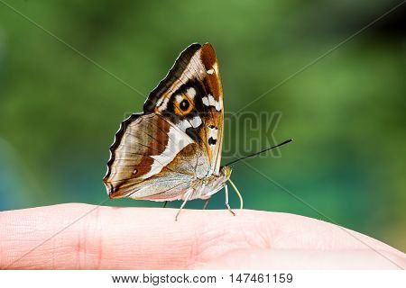 Beautiful Butterfly Resting On The Hand