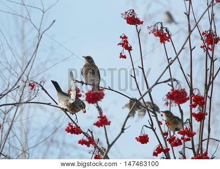 Flock Of Jays