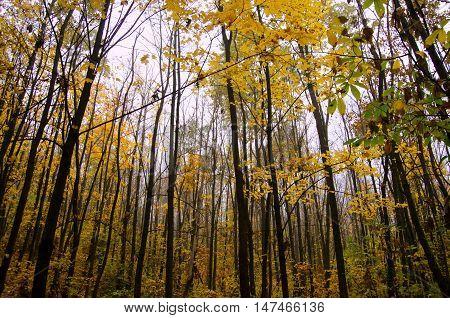 Trunks of trees autumn forest. Treetops. October. November.