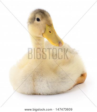 duckling who are represented on a white background