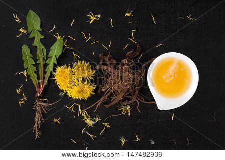 Dandelion background herbal remedy. Dandelion flower leaves and root isolated on black background.