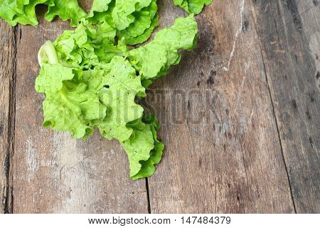 chinese cabbage organic vegetables on a wooden table background