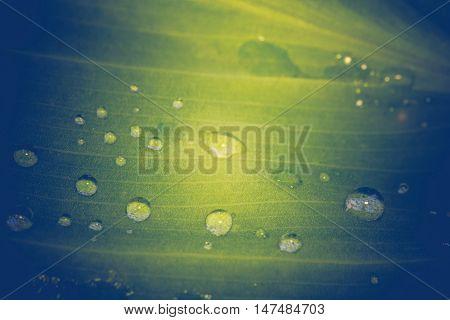 Green Leaf Macro Retro