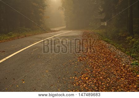 Mountain road covered with fog at autumn, mountain Goc in Serbia