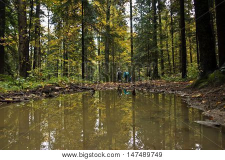 Pond with trees reflections in a forest after autumn rain at mountain Goc, Serbia