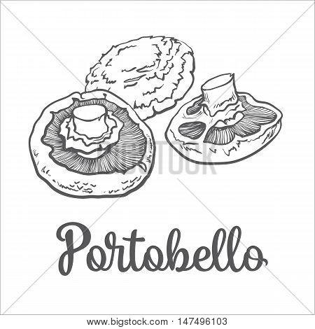 Set of portobello, edible mushrooms sketch style vector illustration isolated on white background. Collection of edible mushrooms portobello