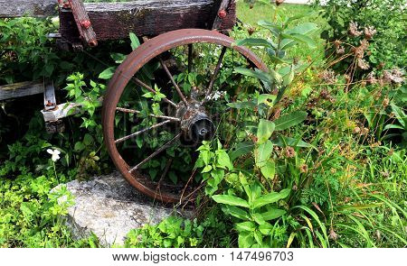Old tobacco trailer used at a tobacco wharehouse sits overgrown with weeds. Steel wheel is rusty but still solid.