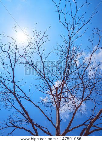 Bald tree in winter forest on blue sky