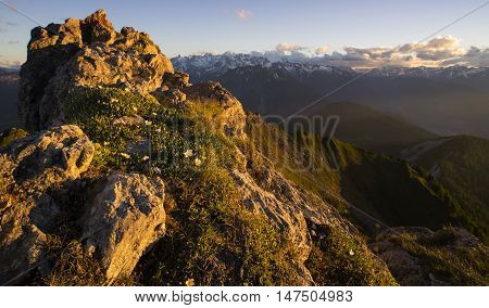 Saxifraga stellaris growing in between rocks at high altitude in the Swiss alps in the background is the Mont Blanc massif and the mountains surrounding the Chamonix valley.