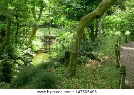 Trees, River And Bridge In Japanese Garden