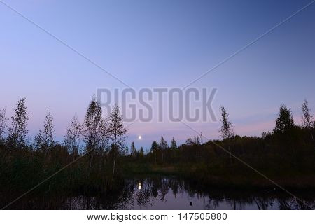Autumn moon in the sky over the forest swamp