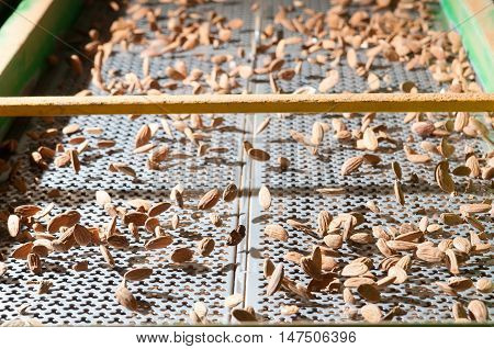 The process of almond selection and calibration in a carriage of a modern factory