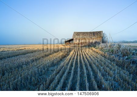 Arriving Winter and Already Harvested Fields with Barn