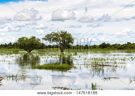 Pantanal in Mato Grosso. The Pantanal is one of the world's largest tropical wetland areas located in Brazil , South America