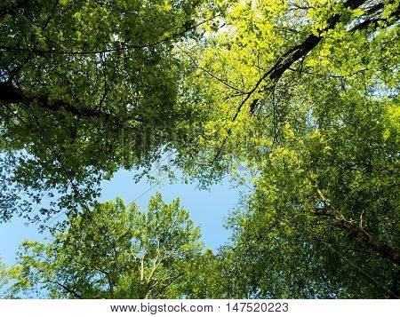 Many deciduous trees in deciduous forest in wild nature