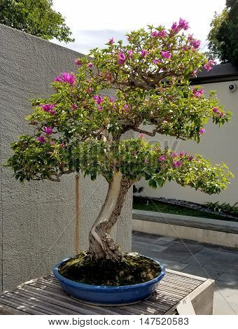 Bonsai and Penjing landscape with miniature flowering tree in a tray
