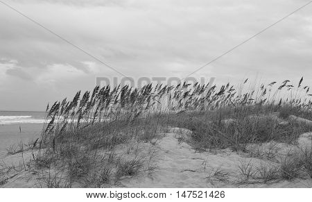 Sea oats and grass on a sandy pathway to Cocoa beach, Florida.