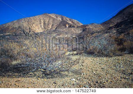 Brush In Rocky Desert