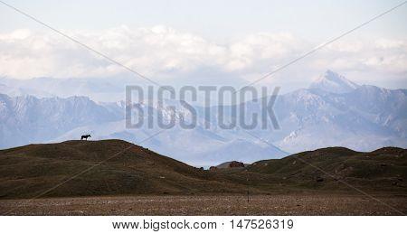 Horse sihluette and mountains. Achik-Tash meadow. The Lenin peak base camp.