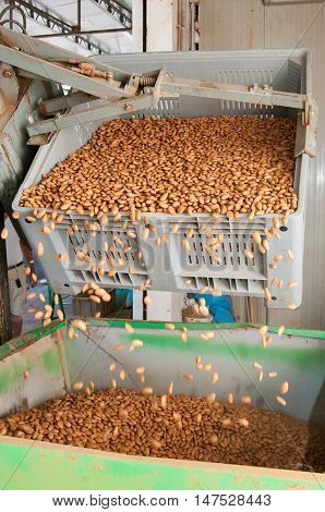 A bin forklift pouring down almonds in a big metal funnel before the industrial working process