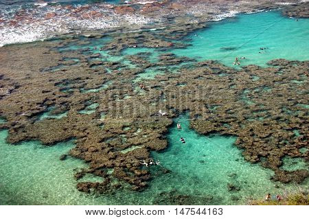 Coral reef with people snorkeling at Hanauma Bay, Oahu, Hawaii