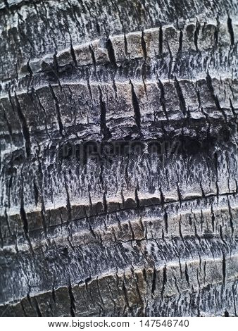 closeup shot of old coconut tree bark texture background