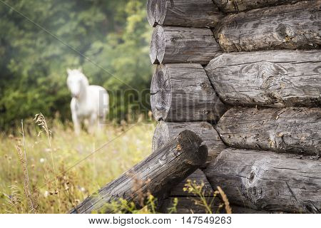 The angle of the old log house close-up on a background of a white horse in the distance.