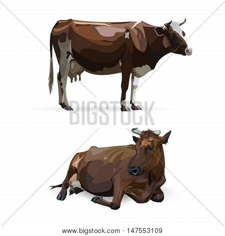 cow lying vector selection, traditions, ranch, design