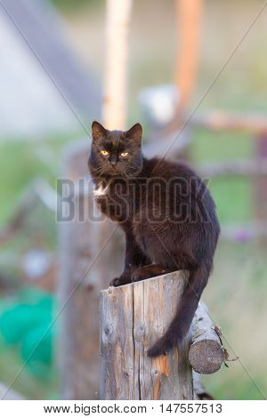 black cat sitting on a wooden fence