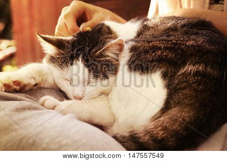 close up outdoor photo of the cat on lap stroke with hand and fingers