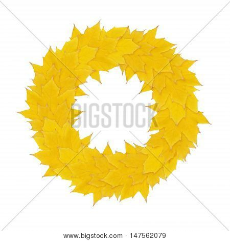 Autumn yellow wreath from maple leaves isolated on white