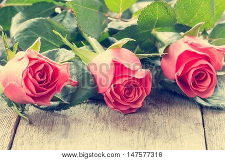 Close-up three pink roses lying on the wooden background