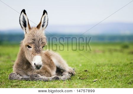 young baby donkey